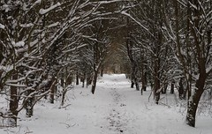2018 march 18 snow sheffield shirebrook valley  (24) (Simon Dell Photography) Tags: tree tunnel path walk shirebrook valley park snow uk sheffield hackenthorpe s12 simon dell photography 2018 minibeastfromtheeast weather nature wildlife birds narnia winter wonderland spring march 18th