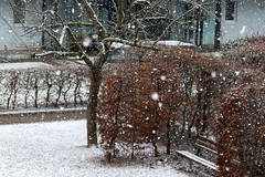 Snow in March I
