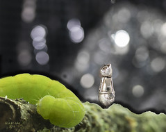 Once upon a time (eMMa_bOOm) Tags: macromondays grimm pussinboots macro photoshop addedtogether themebased theme fairytale story themegrimm caterpillar dragon phlogophorameticulosa silvercharm cat onceuponatime