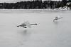 Take-off (David Thyberg) Tags: 2018 långfärdsskridsko winter nature skate sweden stockholm skating värtan ice sverige