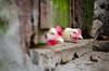 A votre bon coeur !!! (J-C Isabelle) Tags: poule ferme coq bassecour campagne nikon d5100 sigma 70200