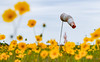 (captainmeltsner) Tags: airport wildflower windsock daisy daisies