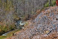 Bouquet Creek (joe Lach) Tags: bouquetcreek bouquetcanyon sierrapelonamountains leonavalley losangelescounty joelach creek stream brook trees