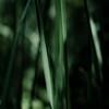 Marshland Grasses 056 (noahbw) Tags: d5000 dof nikon prairiewolfsloughforestpreserve abstract blur depthoffield grass landscape leaves light marshland natural noahbw prairie quiet shadow square still stillness summer wetlands marshlandgrasses