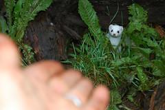 Kroschel Films Wildlife Center (niceholidayphotos) Tags: