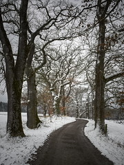 leaving winter (koaxial) Tags: p3187430p1ma koaxial road winter 2018 spring bare trees alley allee bäume kahl strasse path way cold frozen snow