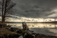 Friendship (hjuengst) Tags: dogs hunde photoshooting lake see lakestarnberg clouds wolken friendship freundschaft föhn reflection reflektionen sunset sonnenuntergang bavaria bayern session happyeaster spring frühling