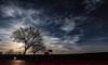 Night Magic (saromon1989) Tags: moon stars clouds tree nature starsky sky night nightsky shadow shadows dark ambient