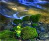 schlüsselblume (Hanspeter Ryser) Tags: schlüsselblume blume bach wasser stein moos natur landschaft frühling art kunst landart schweiz switzerland centralschweiz