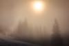 Fog (Bugtris) Tags: gurnigel 2470f4l nebel landschaft tree wald fog canon 5dmkiii alpen gantrisch
