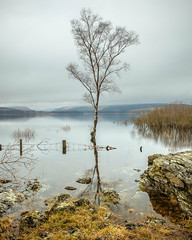 Clatteringshaws Loch Shore (Stephen_Lavery) Tags: loch clatteringshaws scotland tree water lake