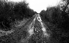 Through Muddied Waters (JamieHaugh) Tags: clevedon northsomerset england uk gb greatbritain outdoors sony a6000 blackwhite blackandwhite bw monochrome muddied pathway puddles waters trees bushes nature route countryside moors farmland ilce6000 zeiss