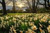 Flower Power (highflyer1964) Tags: sonyilce deutschland landscape sunset sonnenuntergang ilce7m2 schwaneninsel bäume hessen sonyilce7m2 fe1635mmf4zaoss sonyalpha7m2 clouds kassel karlsaue landschaft himmel wolken blumen