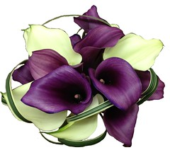 Purple and White Callas (Flowers by Moonstones - Fareham Florist) Tags: bridalbouquet weddingbouquet weddingflowers bridal wedding flowersbymoonstones moonstones flowers florist fareham farehamflorist freshflower purple white calla callylily lilyl