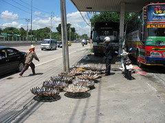 rushing to fill an order (the foreign photographer - ฝรั่งถ่) Tags: one sun fish vendor trays buses chaengwattana road bangkhen bangkok thailand canon