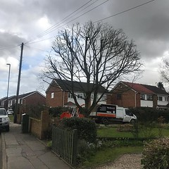 "Sycamore reduction in Coventry on today's job. Lovely weather for it ! #wardenstreecare <a style=""margin-left:10px; font-size:0.8em;"" href=""http://www.flickr.com/photos/137723818@N08/25971115267/"" target=""_blank"">@flickr</a>"