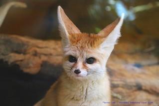 I'm All Ears........