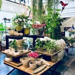 Loving the Flowers (Sitges - Visit Sitges) Tags: loving flowers garden flores espacio floral paisajismo ramos novia bodas decoración flors decoració rams
