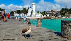 Puerto Morelos-Yucatan-Mexico (johnfranky_t) Tags: mexico pontile caseggiati yucatan barche torre tower bandiera flag nuvole clouds pier johnfranky t samsung s7