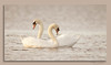Swans... (Catherine Cochrane) Tags: naturallight light sunset nature wildlife swans sea outdoors birds bird