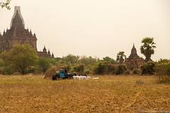 Myanmar-20180324-1259 (ShaneAndRobbie) Tags: nyaungu mandalayregion myanmarburma mm myanmar burma bagan pagoda temple baganarchaeologicalzone baz