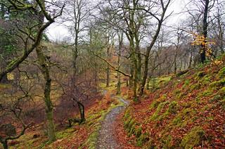 Birnam Woods