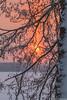 Aurinkopilari, Sun pillar (pohjoma) Tags: aurinkopilari halo ilta iltaaurinko iltahämärä iltarusko kasvi tervaleppä finland evening sunpillar tree snow lake sun canoneos7dmarkii canonef100400mmf4556lisiiusm