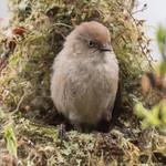 My Nest is Ready thumbnail