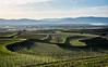 Wine and Forest (Konsti.) Tags: bötzingen kaiserstuhl eichstetten wein vine weinberg vineyard summer sun sonne frühling