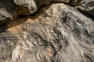 Fossils in the Rocks 5734
