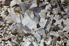 Fallen leaves (Henri Koskinen) Tags: parasetamoli paracetamol panadol crystals kide kiteet abstract fallen leaves 15032018