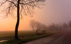 The Road Ahead (Alfred Grupstra) Tags: nature tree landscape fog outdoors autumn sunset mist scenics morning bench forest season ruralscene beautyinnature tranquilscene nopeople dusk sunlight grass
