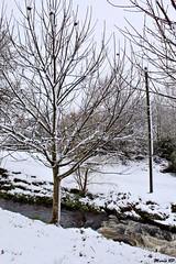 Photos Marco BP (6)_GF (marcbihanpoudec) Tags: bretagne neige plabennec plan deau lac banc arbres