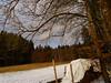 DSC02705 (bratispixl) Tags: fotosafari oberbayern germany bratispixl tele lichtwechsel schärfentiefe fokussierung bergwelt spot outdoor indoor architektur landschaft grat hügel wasser sonnenfotografie see flus tiere nature nigth day spuren blumen wolken video