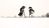 Solitude (John (Thank you for >2 million views)) Tags: 7dwf landscapephotography trees durdhamdowns winterscene arboles snow emotion bristol southwestengland england