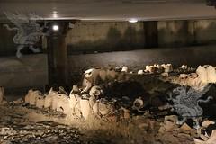 museoDiffuso Testaccio_mercato_12