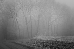 The Curve (Mulewings~) Tags: foggymorning hoarfrost blackandwhite woods trees backroads gravelroads vernoncounty outtheresomewhere thecurve morningwalk walkwithcharlie