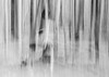 The trees. (MyImageJournal) Tags: abstract forest trees man hiking walking shadow