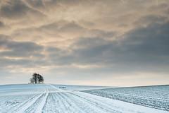 Snowy day at the Barrow (littlenorty) Tags: brightwellbarrow england europe footpath gear lone longwitenham nature oxfordshire season sunrise tree unitedkingdom weather weatherandseasons winter fuji1655 fujix20 snow