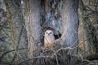 Owl be darned....it's an owl