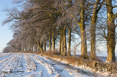 K5-110212-18 (Steve Chasey Photography) Tags: bath beechtrees cotswolds freezinghill gloucestershire k5 pentaxk5 smcpentaxda1650mm snow