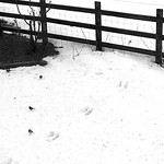 Hare today, gone tomorrow thumbnail