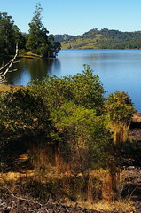 Lake Baroon (davidjamesbindon) Tags: lake baroon montville sunshine coast queensland qld australia hinterland nature outdoors landscape trees shrubs