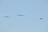 DSC_8967 (Tim Beach) Tags: 2017 barksdale defenders liberty air show b52 b52h blue angels b29 b17 b25 e4 jet bomber strategic airplane aircraft