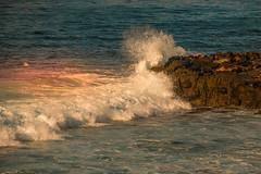 IMG_9229.jpg (smilerockon52) Tags: 2018 california sandiego lajollacove