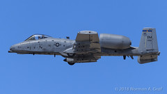"Fairchild Republic A-10C Thunderbolt II of the 354th Fighter Squadron ""Bulldogs"" from Davis-Monthan AFB (Norman Graf) Tags: 2017a10heritageflightteam a10 a10c tacticaldemonstrationteam 810956 airplane 355fw heritageflight usaf aircraft fairchildrepublic airshow 354fs 12af 2017losangelescountyairshow bulldogs 12thairforce 354thfightersquadron 355thfighterwing cas closeairsupport dm davismonthanafb jet plane thunderboltii unitedstatesairforce warthog"