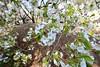 IMG_5794 (digitalbear) Tags: canon eos6d sigma 14mm f18 dg art shinjku gyoen sakura cherry blossom blooming hanami tokyo japan