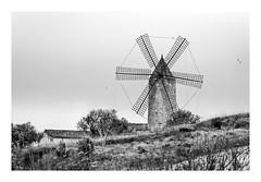 MOLINO  MALLORQUIN  (Palma de Mallorca ) (RAMUBA) Tags: molino mallorca paisaje landscape windmill blanco y negro bw