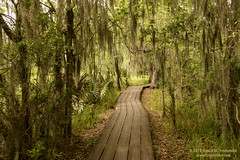 Barataria Preserve (dtredinnick13) Tags: baratariapreserve nationalpark nps moss swamp wetlands neworleans louisiana bayou nikon nikond850 nikon28300 nature naturephotography landscape landscapephotography south