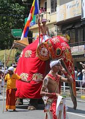 Perahera Elephant (1X7A4738b) (Denish C) Tags: srilanka ceylon serendip kandy esala day perahera pageant procession parade festival religion street buddhism culture tradition heritage elephant caparison red mahout rider man people